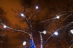 White lights on trees Stock Photos
