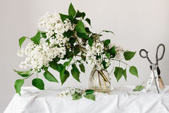 White Lilac Bouquet Stock Photography