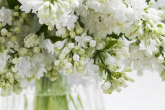 White lilac bouquet.Spring blossoms perfumed lilac flowers, sele Stock Image