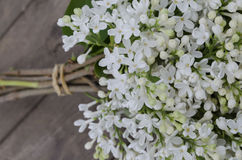 White lilac. On dark wood table Royalty Free Stock Images