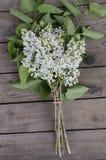 White lilac Royalty Free Stock Photo