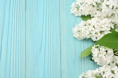 White lilac flower on blue wooden background. top view with copy space royalty free stock photo