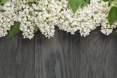 White lilac flower on old oak table top view with stock photo