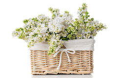 White lilac flowers in a basket isolated Stock Image