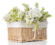 White lilac flowers in a basket isolated Royalty Free Stock Photos