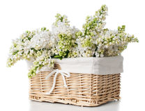 White lilac flowers in a basket isolated Royalty Free Stock Images