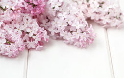 White Lilac Flowers Bouquet stock photos