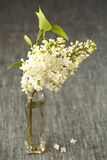 White Lilac flowers Stock Image