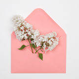 White lilac flowers  in a pink envelope Royalty Free Stock Photos