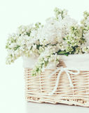 White lilac flowers in a wicker basket Stock Photos