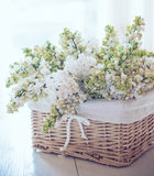 White lilac flowers in a wicker basket Royalty Free Stock Images