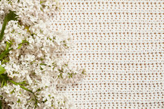 White lilac on knitted fabric. Stock Photography