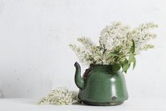 White lilac in old teapot on white background Royalty Free Stock Photo