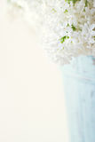 White lilac spring flowers Stock Images