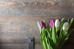 White and lilac tulips Stock Photo