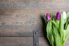 White and lilac tulips Stock Photos