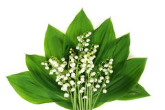 White lilies. Convallaria majalis flowers - lily of the valley. White lilies isolated on white background Stock Photos