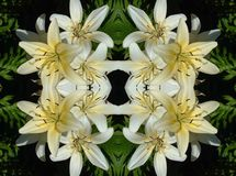 White Lilies on Black Pattern Royalty Free Stock Images