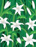White Lilies Background Stock Image