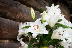 White lilies on brown wooden background. Outdoor Royalty Free Stock Photography