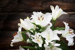 White lilies on brown wooden background. Outdoor. White lilies on brown wooden background Stock Photography