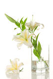 White lilies ' bunch Royalty Free Stock Photo