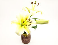 The white  lilies Royalty Free Stock Images