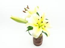 The white lilies stock photos