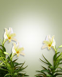 White Lilies Floral Easter Background. Image composition of white lilies for background, invitation or template with copy space Royalty Free Stock Photography