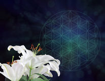 White Lilies and the Flower of Life Symbol Background. Three white lily heads on left hand side with dark blue and green muted Flower of Life symbol behind with royalty free stock photography
