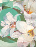 White lilies on green background. Hand painting. Stock Image