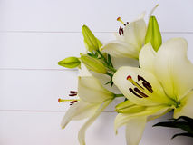 White lilies and green flower bulbs. Beautiful white lilies and green flower bulbs on a white wooden background Royalty Free Stock Photo