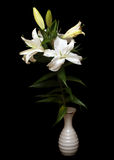 White lilies isolated on black Royalty Free Stock Image