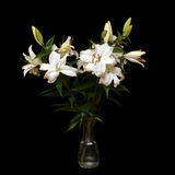 White lilies isolated on black Stock Photography