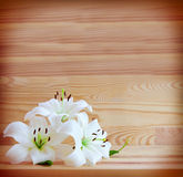 White lilies isolated . Royalty Free Stock Images