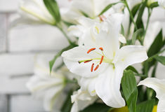 White lilies on light wooden background. Outdoor Stock Image