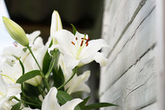 White lilies on light wooden background. Outdoor Stock Photography