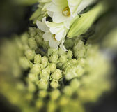 White Lilies and Roses Stock Photos