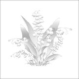 White lilies of the valley, symbol of the beginning of spring. Vector illustration Stock Images