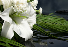 White lilly. With green leaves and wather drops royalty free stock photography