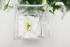 White Lilly. In a square vase stock photo