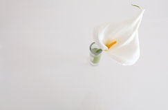 White lilly. On a white background Stock Photo