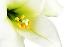 White lilly macro. Close-up of the inside of a white lilly Royalty Free Stock Images
