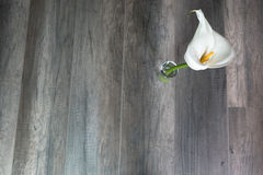 White lilly. On a wooden background Royalty Free Stock Photo