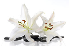 White lily. Two white lily with spa stone Stock Images
