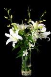White lily Royalty Free Stock Photo