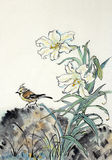 White lily and bird. White lily and a bird painted in Chinese style Royalty Free Stock Image