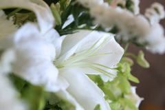 White lily bouquet in a side view royalty free stock photos