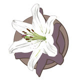 White lily clip art Stock Images