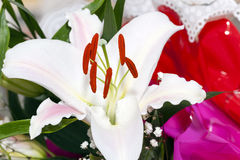 White Lily. close up. Photographed close up of a white lily Stock Photos